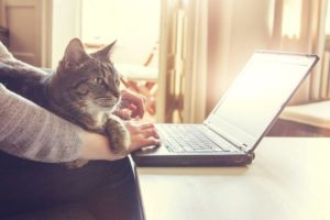 cat_and_person_typing