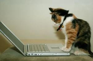 cat_at_computer